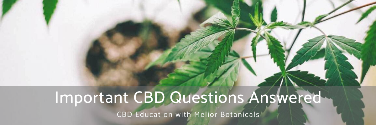 Important CBD Questions Answered